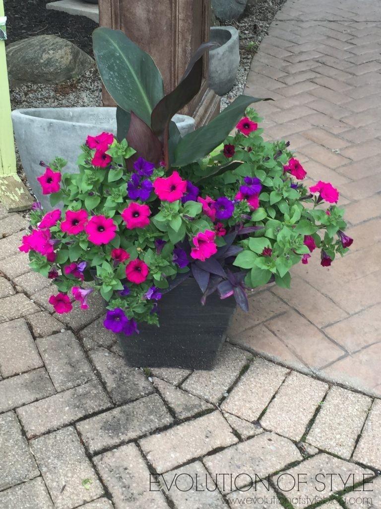 Outdoor Summer Flowers